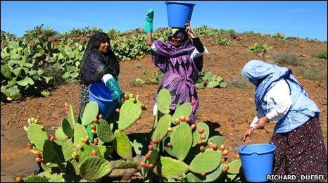Las agricultoras encuentran que las plantas de cactus son una verdadera fuente de dinero.
